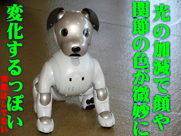 DSC01251.JPG